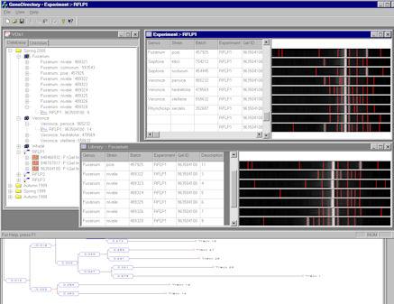 gentools, genesys, synoptics dym, gen plaza, gen plaza biotech, gen plaza biyoteknoloji merkezi, synoptics, syngene, 1d gel, analysis software, 2D gel analysis, 2d jel analizi, analiz yazılımı